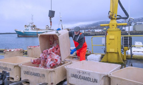 3 Sauðárkrókur. Hometown to Atlantic leather. Sustainable fish skin tannery in Iceland